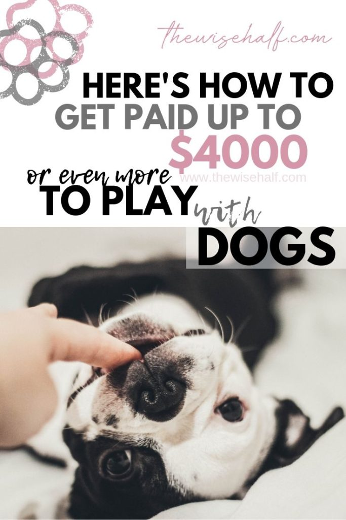 Get Paid Playing With Cats And Dogs With This Cool Pet